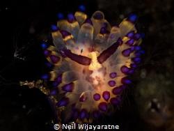 The masquerade ball .... by Neil Wijayaratne