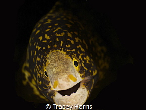 Baby Snowflake Eel by Tracey Harris