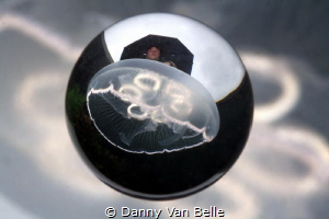 Jellyfish on a rainy day by Danny Van Belle