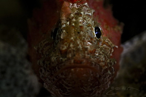 ~ Eye Spy ~