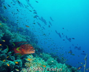 Gathering of marine life by Pieter Firlefyn