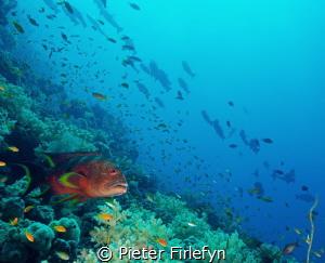 Gathering of marine life by Pieter Firlefyn