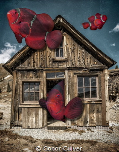 """Family Home"" part of my Underwater Surrealism series by Conor Culver"