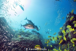 Feeding time...Sodwana Bay was full of Bait fish and the ... by Kenneth Hicks
