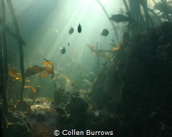 Wonderland of light and shadows. If you are quiet and pat... by Collen Burrows