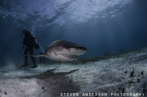 Standing in the shadows at Tiger Beach as this Lemon Shar... by Steven Anderson