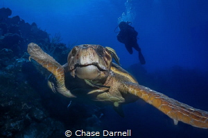 Face to Face When you are the biggest creature cruising ... by Chase Darnell