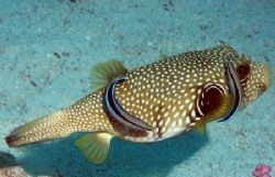 Taken in the Gulf of Aqaba D70 with 105mm macro by Chris Kennedy