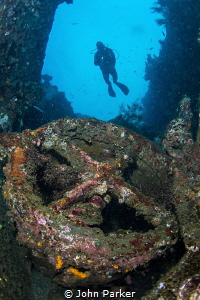 Liberty wreck and diver by John Parker