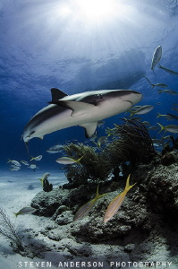 Sharks help maintain a good balance for the reefs that su... by Steven Anderson