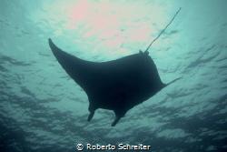 Manta Night Dive at Kona, Hawaii by Roberto Schreiter