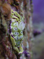 Taken at Tenggol Island, Malaysia. by Siew Ling Chang