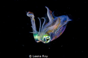 Squid by Leena Roy