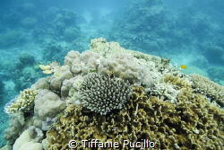 Snorkling over the Great Barrier Reef. Shot with Canon 60... by Tiffanie Pucillo