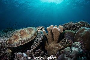 Pristine reefs in Tubbataha by Henley Spiers
