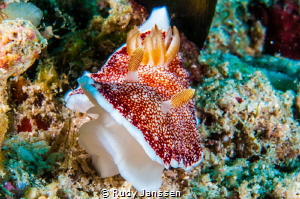 Nudibranch by Rudy Janssen