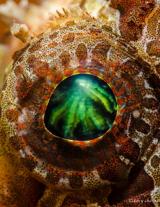 Green Fire in the Eye of a Lion (Lionfish) by Tony Cherbas
