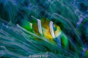 Anemone in slow motion by Leena Roy
