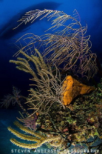 Healthy reefs and clear water of the Bahamas and at the s... by Steven Anderson