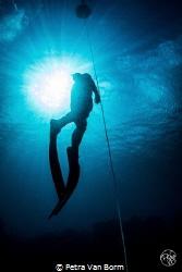 Freediver ascending by Petra Van Borm