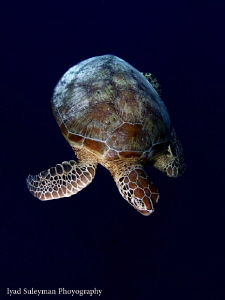 See Turtle by Iyad Suleyman