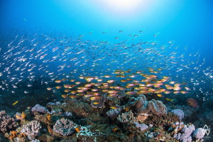 """""""Silver & Gold""""  Beauty & Youth surround the reefs this... by Allen Walker"""