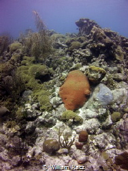 Shot this image of some reef in curacao. by William Racz