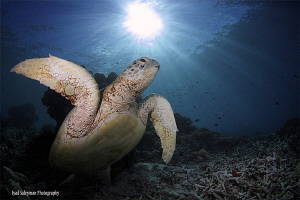 Turtle at Sipadan Island by Iyad Suleyman