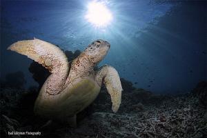 Turtle at Sipadan Island by Iyad Suleyman