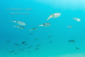 Squid Roe, Isla Verde Veracruz by Alejandro Topete