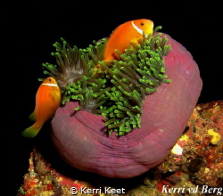 Maldives has always been on my bucket list of diving dest... by Kerri Keet