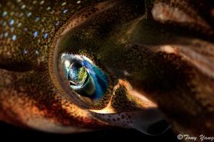 eyes light by Tony Yang