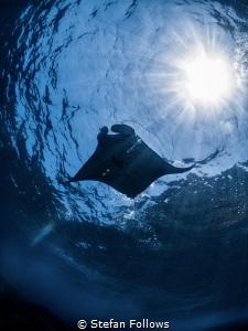 Ray Ray  Manta Ray - Manta alfredi  Manta Point, Bali... by Stefan Follows