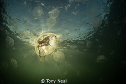 Morning Sun by Tony Neal