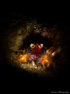 Squat lobster by Kelvin H.y. Tan