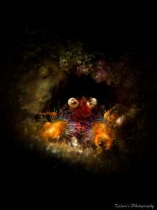 Squat lobster by Kelvin H.y. Tan