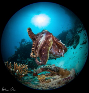 Squid Power by Steven Miller