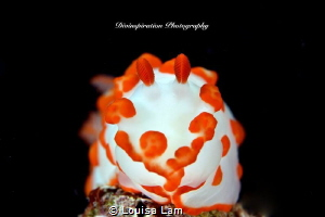 Mr. Spongy by Louisa Lam