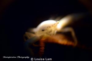 Glow in the Dark by Louisa Lam