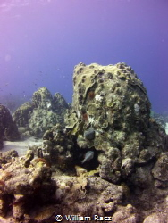 Reef on Curacao by William Racz