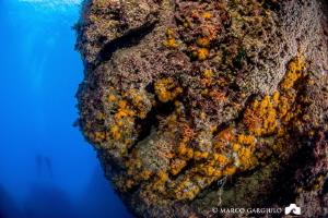Corraligen and divers by Marco Gargiulo