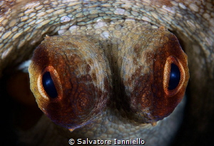 Look me by Salvatore Ianniello