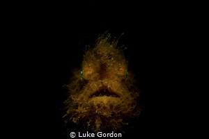 The Hairy Angler by Luke Gordon