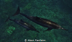 """Dolphins Below!"" by Alison Ranheim"