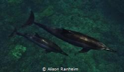 """Dolphins Below!"" by Alison Ranheim"