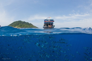 schooling barracudas under the boat with Tachai Island on... by Pepe Suarez
