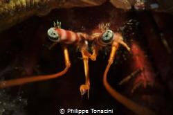 bernard l'hermite by Philippe Tonacini
