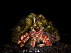 H I T C H H I K E R