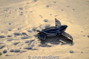 Goodbye to the land, hello to the open ocean. Atlantic Si... by Arun Madisetti