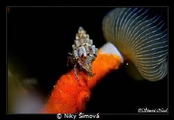 night diving by Niky Šímová